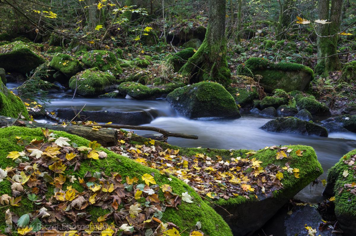 Herbstliche Ascha